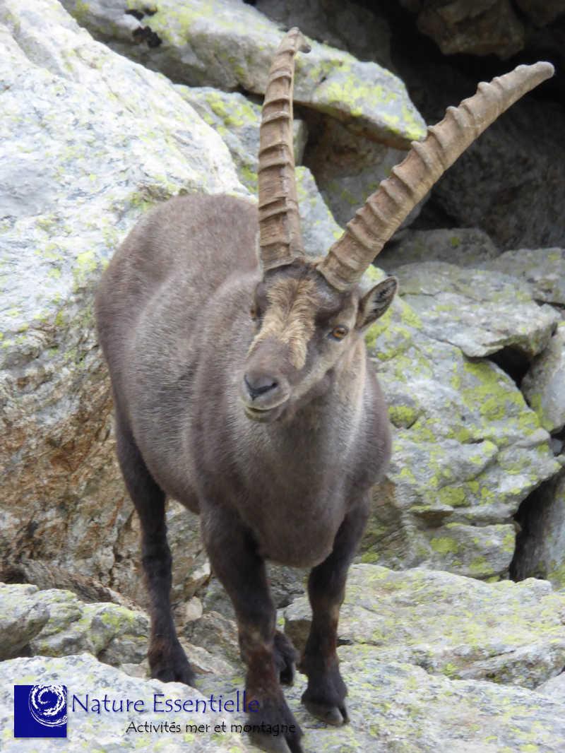 Wild Trip 2018: du 23 au 23 juillet – Mercantour – Vallée des Merveilles